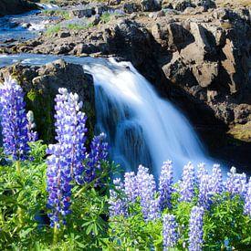Blumen am Wasserfall von Fabian Roessler
