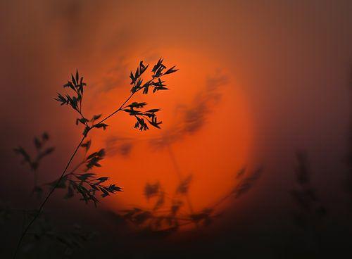Sunset grass van