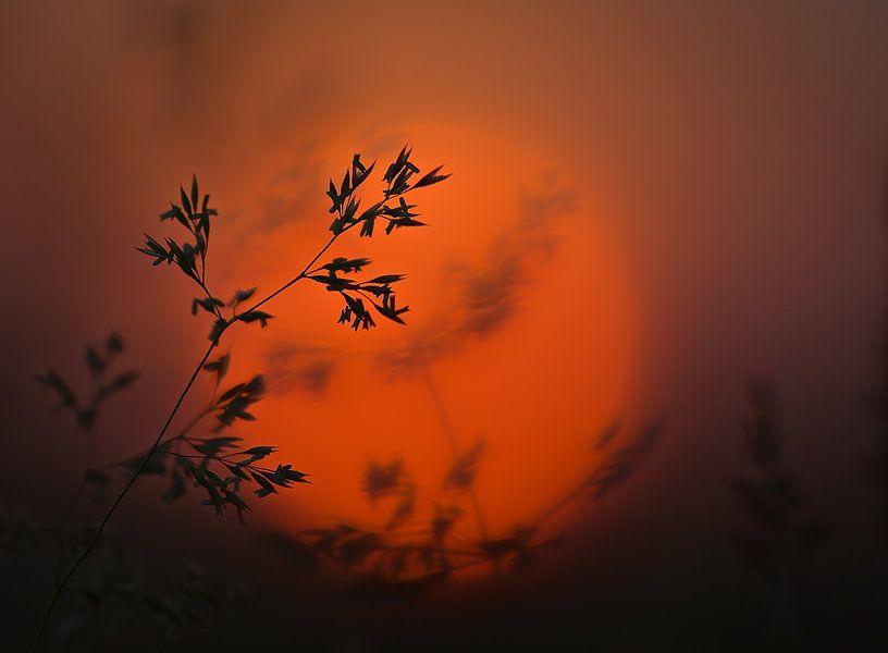 Sunset grass van Christl Deckx