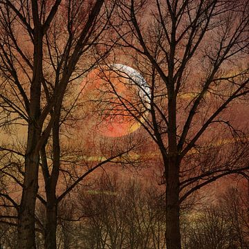 Maan 4 van Alie Ekkelenkamp