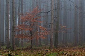 Herfstgetuigen in het bos van Denis Feiner