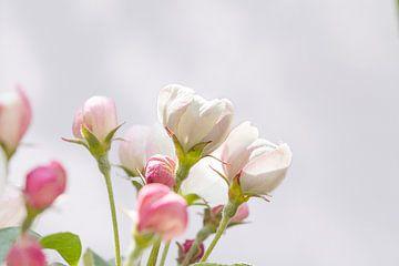 Kleine appelbloesem van Noortje Muller