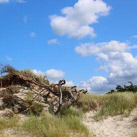 Am Weststsrand von Ostsee Bilder