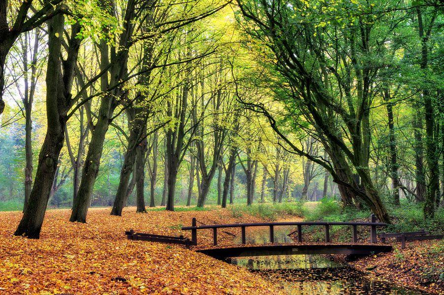 Herfst brug in het Amsterdamse bos van Dennis van de Water