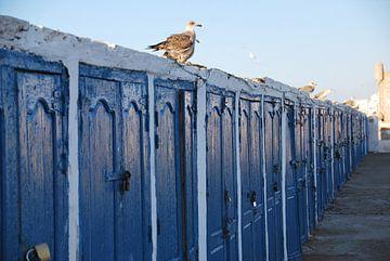 Vogels en blauwe deuren -Essaouira - Marocco van Homemade Photos