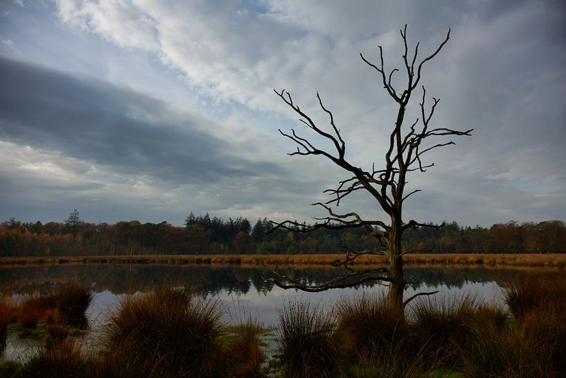 Ven met boom van Anneke Hooijer