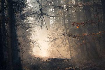 Zonlicht op een bospad sur Evert Jan Kip