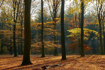 Herbstwald von Ad Jekel