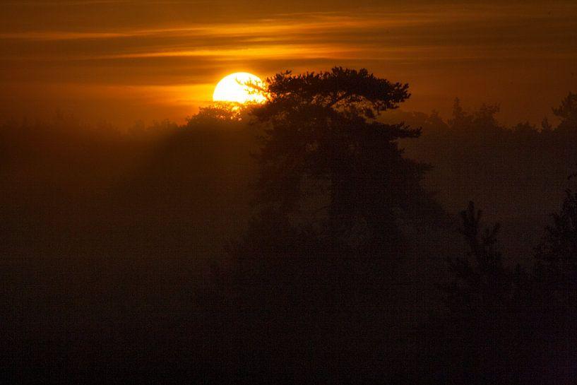Zie de zon schijnt door de bomen van Mark Balster