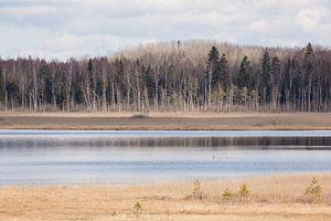 Natuur | Bossen en meren in Estland 1