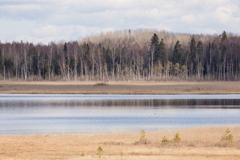 Natuur | Bossen en meren in Estland 1 van Servan Ott