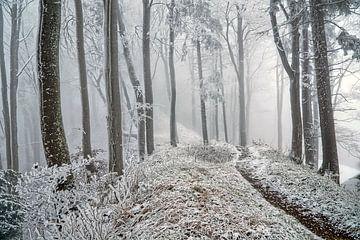 Winterwald von CSB-PHOTOGRAPHY