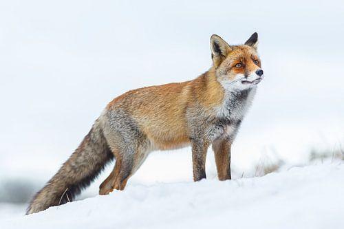 Snowtime von Pim Leijen