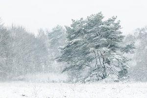 Boom in sneeuwjacht van