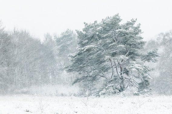 Boom in sneeuwjacht