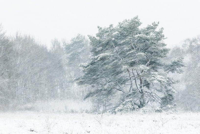 Boom in sneeuwjacht van Karla Leeftink