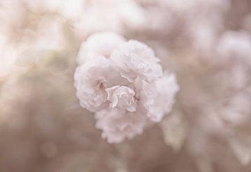 Blumen Teil 140 von Tania Perneel