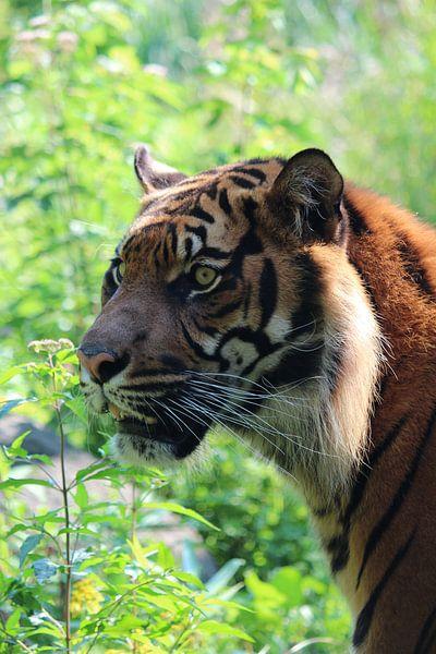 Hoofd van een tijger met groene achtergrond van André Muller