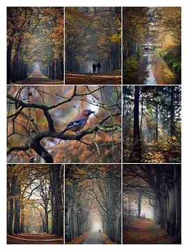 Herfst in de Gaasterlandse bossen von Jitske Van der gaast