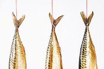 Makrelen staarten hangend tegen een witte achtergrond van MICHEL WETTSTEIN
