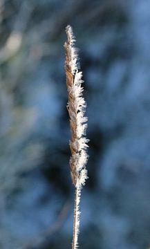 Eiskristalle van Iris Volkmar
