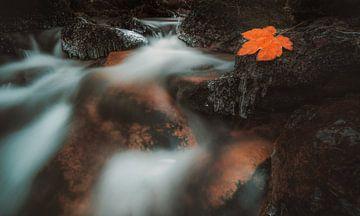 Ahornblad op steen in stroom van Marc-Sven Kirsch
