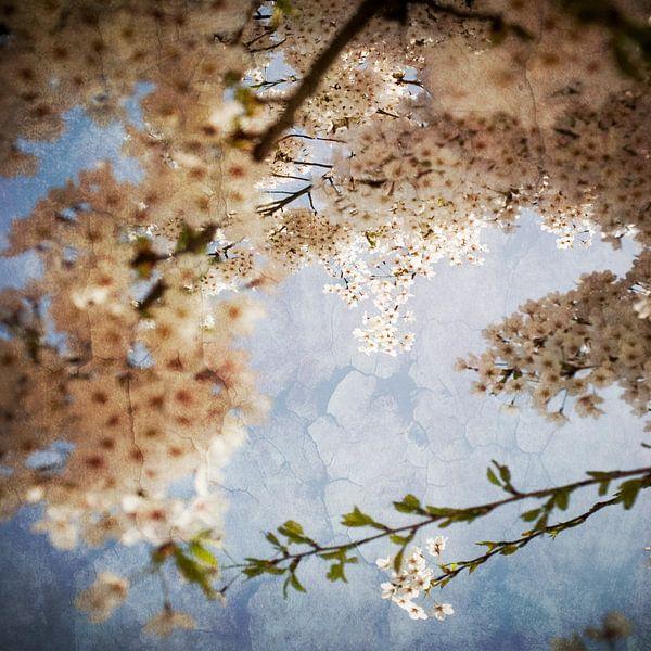 Droom bloesem in Westerpark van Margo Schoote