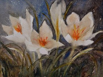 Krokusblüten von Christine Nöhmeier
