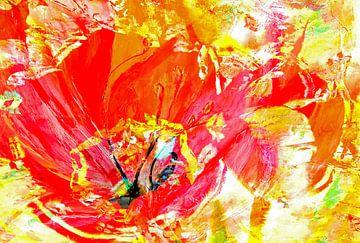 Tulpe von Matthias Rehme