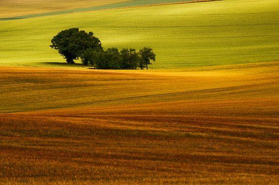 Geisoleerde groep bomen