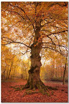 boom van eric brouwer