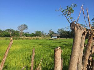Rice field van