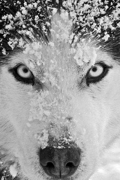 'Romantico' zwart-wit close-up van Brenda Gonzalez