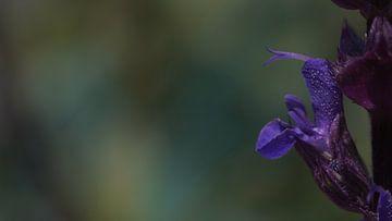 lila Blume von Customvince | Vincent Arnoldussen