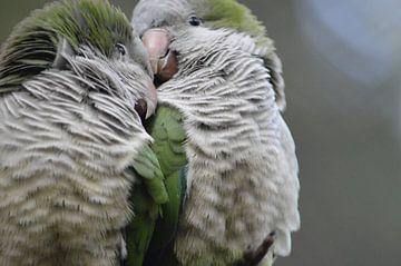 Lovebirds  van Dennis Mullenders