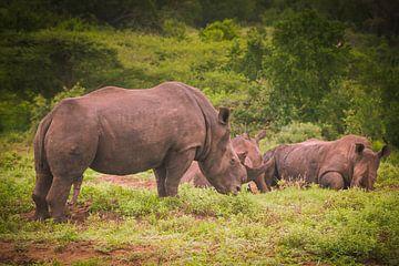 Witte neushoorn, Zuid Afrika van Rob Reedijk