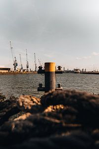 De Haven van Ronald Looijestijn