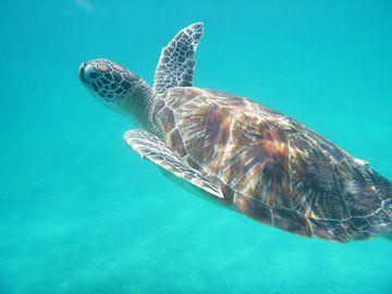 Schildpad onder water von Irma Boonman