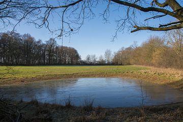 Gefrorener Teich von Manuel Declerck