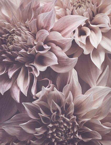 Dahlia Petals van Marina de Wit