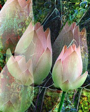 Florale Spielerei A Lotus Blühte  sur Gertrud Scheffler