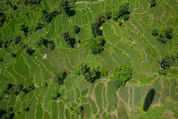 Reisfelder von oben von Merijn Geurts