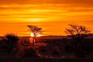 Zonsondergang in de savanne van videomundum