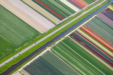 Blumenzwiebelanbau entlang des Kanals von Robert Riewald