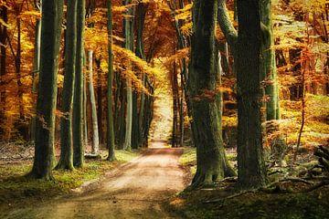 Autumn forest van Elly Besselink