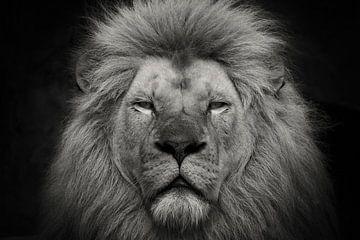 Nahaufnahme Löwe in Schwarz-Weiß von Dennis Schaefer