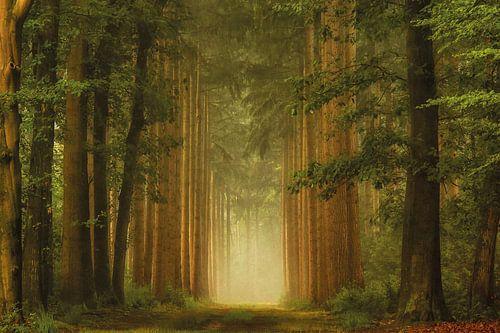 The Portal van Lars van de Goor