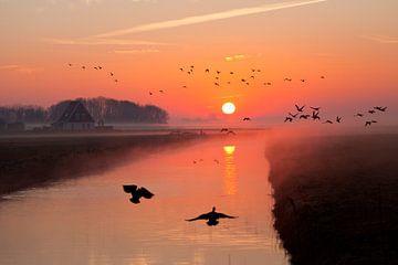 Sonnenaufgang Wezenspyk Texel von Johan Habing