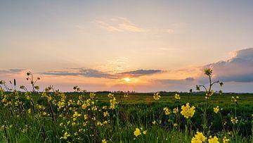 Sonnenuntergang im Polder von Coen Weesjes