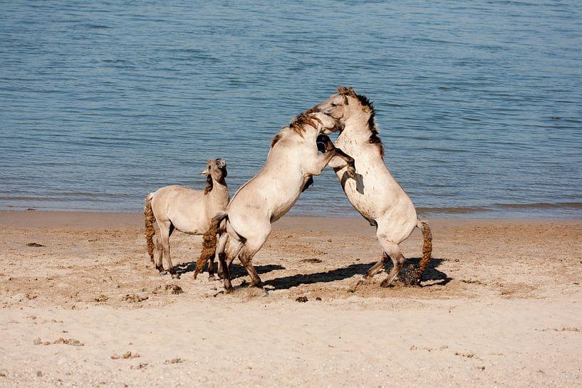 Vechtende paarden van Jim van Iterson